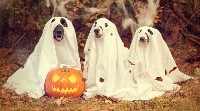 halloween a pejsci
